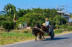 Rural road in Southern Vietnam royalty free stock photo