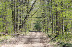Rural Road in Spring Royalty Free Stock Image
