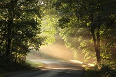 Nature background spring mist fog forest sunset sunrise morning Sun rays sunlight sunbeams Road path trail woods leaves trees