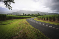 Rural road and Sugarcane Royalty Free Stock Photos