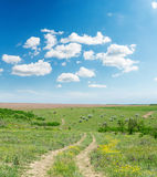 Rural road in summer landscape and blue sky Stock Images