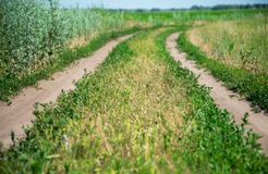 Rural road on sunny day Royalty Free Stock Photos