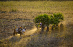 Rural road at sunset in Bagan, Myanmar. Ox carts run on the rural road at sunset in Bagan, Myanmar. Bagan is an ancient city in central Myanmar formerly Burma Stock Photos