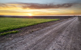 Rural road at sunset. Rural road and green wheat field over sunset Stock Photography