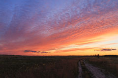 Rural road at sunset. Wildflowers, dirt road, bright colors Stock Photography