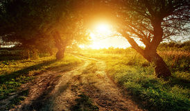 Rural road at sunsethe woods Royalty Free Stock Images