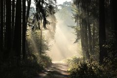 Free Rural Road Through A Misty Autumn Forest At Dawn Path Coniferous Sunrise Morning Fog Surrounds The Pine Trees Lit By Rays Of Sun Stock Photography - 145222232