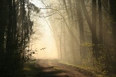Free Rural Road Through The Spring Forest On A Sunny Misty Morning A Dirt Road Through The Early Spring Deciduous Forest In Foggy Royalty Free Stock Images - 139466029