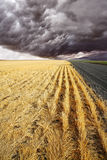 The rural road to fields Royalty Free Stock Photo