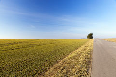 Rural road, tree Royalty Free Stock Photography