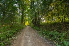 Rural road with trees at sunny autumnal afternoon Stock Photography