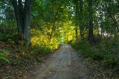Rural road with trees at sunny autumnal afternoon Royalty Free Stock Images