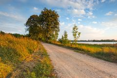 Rural road with trees at sunny autumnal afternoon. Beautiful alley of trees. Rural road with trees at sunny autumnal afternoon. Polish landscape Royalty Free Stock Photos