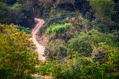 Rural road at tropical forest. Nature colors background Stock Photo