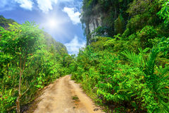 Rural road with tropical plants Stock Images