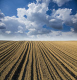 Rural road trough fields of arable land. Arable land over blue sky Stock Photos