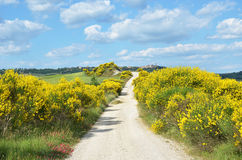 Rural road, Tuscany, Italy Stock Photography