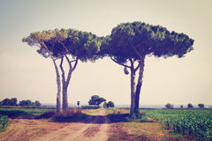Rural Road. Between Two Trees, Instagram Effect Royalty Free Stock Photo