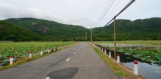 Rural road in Vung Tau, Vietnam. Rural road with lotus lake in Vung Tau, Vietnam Stock Images