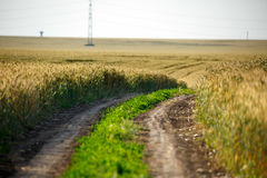 Rural road through a wheat field Royalty Free Stock Photos