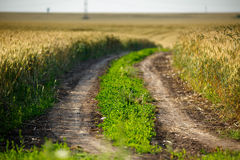 Rural road through a wheat field Royalty Free Stock Photo