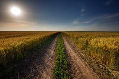 Rural road through wheat field Royalty Free Stock Photography