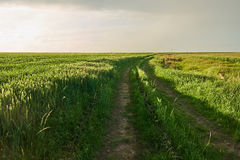 Rural road through wheat field Royalty Free Stock Images