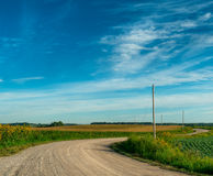 Rural Road Winds Through Corn Fields Stock Photo