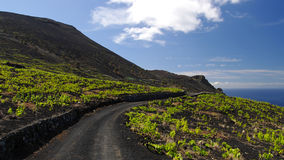 Rural road among the wine grape. La Palma Island royalty free stock images