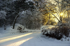 Rural road in winter Royalty Free Stock Photography