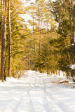 Rural road (winter) Stock Photography