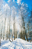 Rural road in winter, birch trees Royalty Free Stock Photo