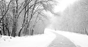 Rural road at winter forest Royalty Free Stock Images