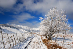 Rural road in winter time Royalty Free Stock Image