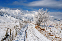 Rural road in winter time Stock Image