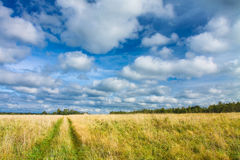 Rural road through the yellow-green fields and blue sky with white clouds. Beautiful summer landscape Royalty Free Stock Photography