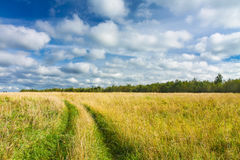 Rural road through the yellow-green fields and blue sky with white clouds. Beautiful summer landscape Royalty Free Stock Image