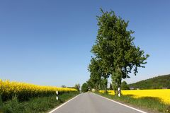 Rural road yellow rape canola field and tree Royalty Free Stock Images