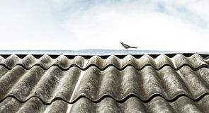 Rural roof Stock Images