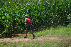 Rural runners. A runner in a marathon runs into a corn field at the 2012 mudathlon in Indiana Royalty Free Stock Photo