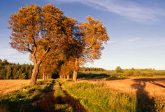 Rural sandy road at autumn Stock Image