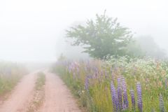 Rural sandy road in dense fog early morning royalty free stock image