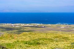 Rural Santorini landscape near Oia with wild flowers and Aegean Sea royalty free stock image