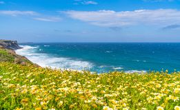 Rural Santorini landscape with wild flowers and Aegean Sea stock image