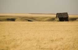 Rural Saskatchewan. In summer with crops Canada Stock Images