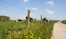 Rural scene. A scenic picture of a field royalty free stock photography
