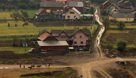 Rural scene. With cows and houses, Romania Royalty Free Stock Photography