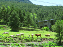 Rural scene Stock Photos