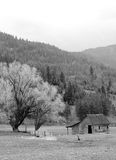 A rural scene in B&W. Image of a barn and trees on the farm in black and white Stock Image