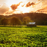 Rural scene Royalty Free Stock Images